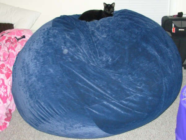 A picture of a black cat sitting atop of a giant, blue Fombag