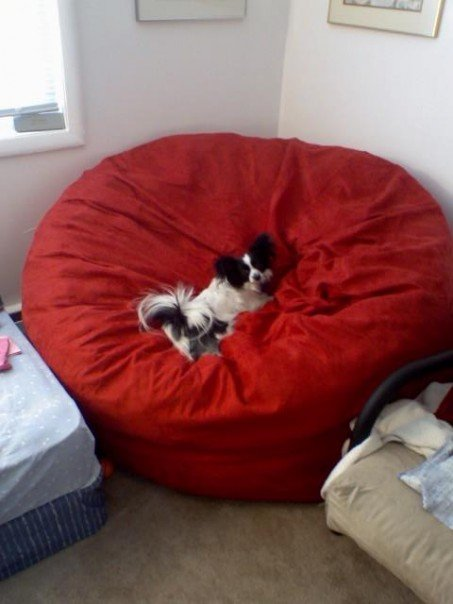 Read Customer Testimonials For Foam Bean Bags
