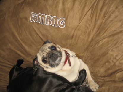 A couple of small pugs relaxing on a brown Fombag